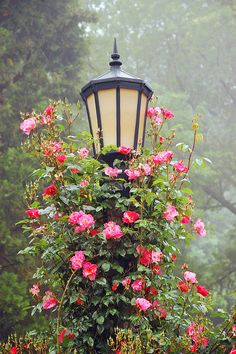 Garden lamp post covered with roses