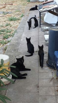 Just the kitties hanging around seeing what's going on Crazy Cat Lady, Crazy Cats, Cat Boarding, Christmas Cats, Cats And Kittens, Kitty Cats, Beautiful Cats, Cat Life, Cat Breeds