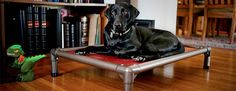 Standard Dog Bed Kuranda Bed- good for ortho very durable if dog chews slipcover available, will fit cages too