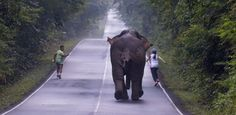 Casal precisa fugir de elefante furioso após tentativa de selfie