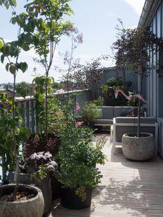 Sweet Potato Plant, Purple Sweet Potatoes, Lemon Lime Nandina, Ornamental Kale, Fountain Grass, Fall Containers, Potato Vines, Fall Planters, Yellow Daisies