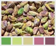 Clarissa Bell: Paleta de colores: pistaches / Color palette: pistachos