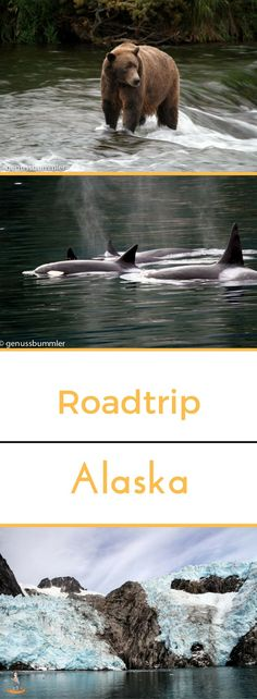 Roadtrip 5: Alaska und ein wenig Wüste