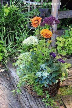 フローラのガーデニング・園芸作業日記-ルドベキア ユウギリソウ 寄せ植え