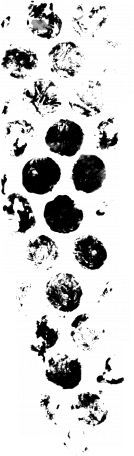 Paint Messy Dots Stamp 001 by Brooke Gazarek | Pixel Scrapper digital scrapbooking