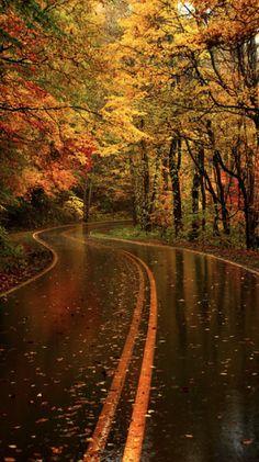 Folhas amarelas na rodovia do Parque Nacional das Grandes Montanhas Fumegantes, na Carolina do Norte, USA.  Fotografia: Tilman Paulin no 500px.