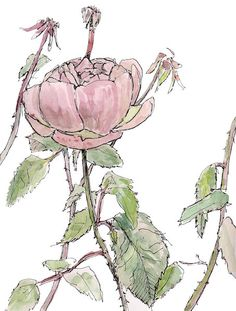 Pink rose in garden. Original matted, framed watercolor flower painting. 9x12. $75.00, via Etsy.