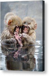 Little Monkeys Photograph by 2por2 - Little Monkeys Fine Art Prints and Posters for Sale