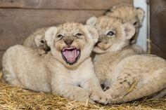 Zoo Born