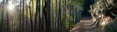 Osaka, Kyoto, Voyage Nepal, Travel, Santiago, American Black Bear, Castle Ruins, The Visitors, Sunrise