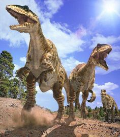 Land of Giants: A 'Walking with Dinosaurs' Special - Nigel Marven travels to a time when monstrous creatures ruled the earth. In South America, he encounters the largest dinosaur that ever lived. Prehistoric World, Prehistoric Creatures, Jurassic Park, Dinosaur Art, Dinosaur Stuffed Animal, Dinosaur Life, Walking With Dinosaurs, Starry Night Art, Largest Dinosaur
