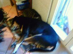 Calzino e Birba » Fbsocialpet.com: il social forum per cani, gatti, cavalli, tutti gli animali