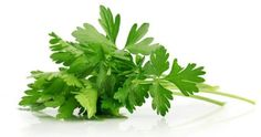 Unveil some of the best health benefits of parsley here. Parsley health benefits can do wonders. It keeps your immune system healthy, protects from cancer,. Varicose Vein Remedy, Varicose Veins, Zucchini Hummus, Herbal Oil, Alkaline Foods, Alkaline Recipes, Healing Herbs, Detox Recipes, Detox Foods