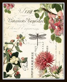 Spring Study Plate 1 - Giclee Canvas Art Print This print features beautiful antique French botanicals intertwined with French script from antique bookplates and layered onto a lightly aged background