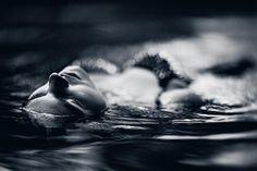 Foto: Wojciech Trzepizur