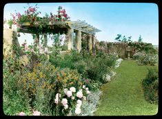 """Check out these color slides from of the Robert Carmer Hill House on Lily Pond Lane: Gray (Grey) Gardens! """" from the Library of Congress, this collection contains homes with architecturally. Grey Gardens House, Gray Gardens, Cottage Gardens, Edith Bouvier Beale, Edie Beale, Site History, Lily Pond, East Hampton, House On A Hill"""