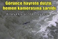 Dünyanın en nadir 12 memeli türü arasında gösterilen Akdeniz fok balığı, Antalya kıyılarında görüntülendi....