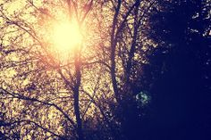 Uma boa gargalhada é a luz do sol em casa.