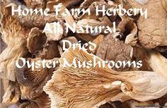 Home Farm Herbery is now offering All Natural Dried Oyster Mushrooms. Order yours today and get free shipping and a free herb, herb blend, tea sampler or heirloom seed of our choice.  http://www.localharvest.org/oyster-mushrooms-dried-C27471