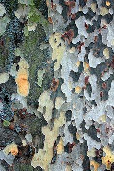 52 Ideas tree bark pattern texture for 2019 Organic Forms, Natural Forms, Natural Texture, Patterns In Nature, Textures Patterns, Nature Pattern, Flora Pattern, Motifs Organiques, Foto Macro