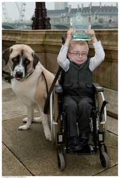 3-legged rescue dog changes the life of boy with disability.