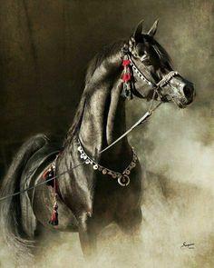 Portrait Cheval arabe noir