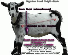 Welcome to Firestone Creek Farm Nigerian Dwarfs and more! WEIGHING YOUR GOAT