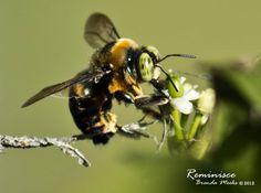 Honey Bee:)