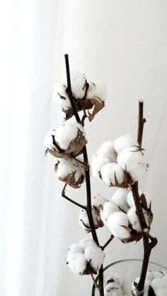 Cotton is so beautiful, and we are so lucky that we have so much in Arizona! Cotton is so bea White Flowers, Beautiful Flowers, Floral Illustration, Deco Table Noel, Cotton Plant, Deco Floral, Design Set, Indoor Plants, Decoration