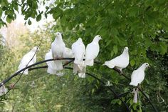 birds of peace . X ღɱɧღ White Cottage, Rose Cottage, Beautiful Birds, Beautiful Gardens, Serenity Garden, Hope Is The Thing With Feathers, White Doves, White Gardens, Garden Gates