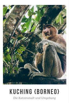 Kuching: Die Katzenstadt und Umgebung {Borneo}