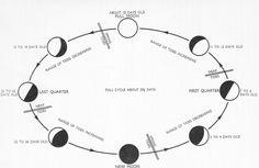 free lunar eclipse worksheet