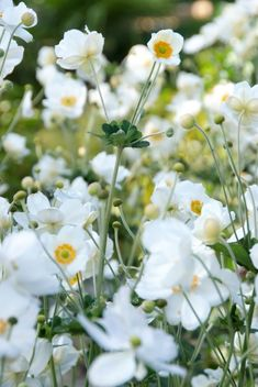 8 Flower Landscape Ideas For Your Garden – Garden Ideas 101 Shade Garden, Garden Plants, White Flowers, Beautiful Flowers, Sloped Garden, Flower Landscape, Garden Inspiration, Perennials, Planting Flowers