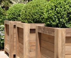 buxus in pallet planter boxes