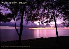 """""""The curtains covered the impressive view over the sea. I never will forget what happened then . . .""""  --  #quote from the #relationship book """"Butterfly Habits: How to Make Your Honeymoon Last Forever"""" ... 15$ ... CLICK http://www.amazon.com/Butterfly-Habits-Make-Honeymoon-Forever/dp/3952425435/ref=sr_1_1?ie=UTF8&qid=1410967720&sr=8-1&keywords=fanny+ritter+milz"""