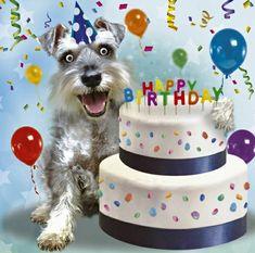 Birthday Messages, Birthday Greetings, Birthday Wishes, Happy Birthday, Birthday Memes, Schnauzer Dogs, Mini Schnauzer, Schnauzers, Birthday Board