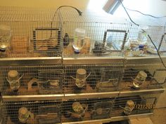 cages from brackenridge Ranch