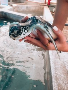 You bought the turtle so you can have more fun with family members and friends. Cute Little Animals, Cute Funny Animals, Cute Dogs, Cute Creatures, Beautiful Creatures, Animals Beautiful, Cute Turtles, Baby Turtles, Funny Babies