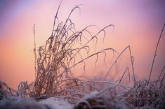 Magic Winter Moments Photograph by Jenny Rainbow Art Prints For Home, Fine Art Prints, Wild Grass, Sunset Colors, Sky And Clouds, Russian Art, Time Art, New Wave, Wood Print