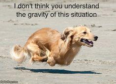 Hover Dog