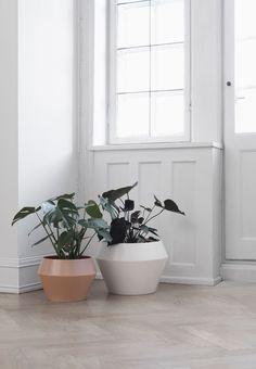 Mogens Lassen elskede grønne planter