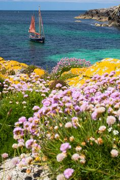 Springtime at the Isle of Mull, Inner Hebrides, Scotland