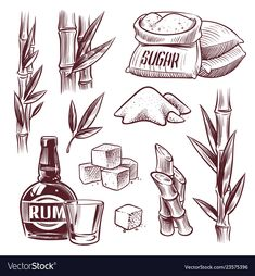 Sketch sugar cane sugarcane sweet leaf sugar vector image on VectorStock Plant Illustration, Graphic Illustration, Illustrations, Sugar Cane Plant, Rum, Food Drawing, Coffee Art, Coat Of Arms, Arm Tattoo
