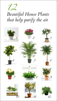 The Best (and most beautiful) House Plants for Cleaner Air