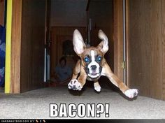 boxer dog funny quotes - Google Search