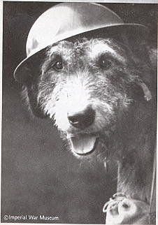 Bally Shannon was an Irish wolfhound taken to France by his master as an ambulance helper, dragging wounded men to safety.