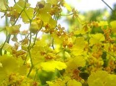 Blog das Orquídeas: Cultivo dicas