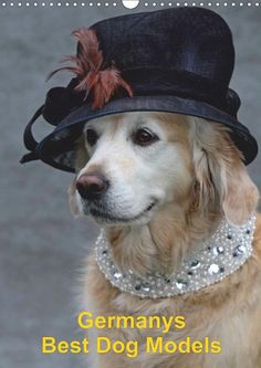 Germanys Best Dog Models - gestylte Labrador und Golden Retriever - CALVENDO Kalender - http://www.calvendo.de/galerie/germanys-best-dog-models-gestylte-labrador-und-golden-retriever/ - #hunde #dogs #kalender #calendar