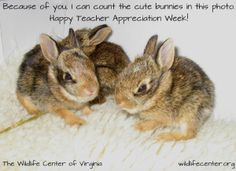 """#ThankATeacher for #TeacherAppreciation Week with one of these """"cards"""" from the Wildlife Center of Virginia. #cuteanimals #bunnies."""