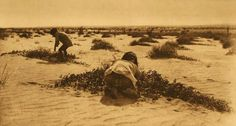 A Photograph of a Melon Field.
